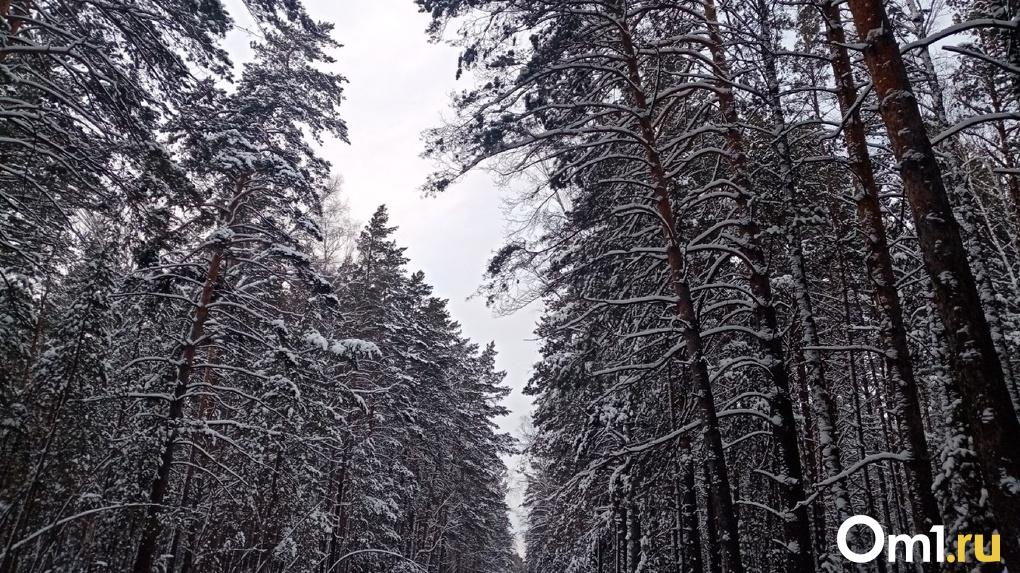 Мороз до -10 градусов: снежные выходные прогнозируют синоптики в Новосибирске