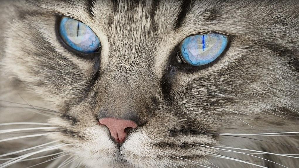 Хозяйке их подбросили: в Новосибирске ищут дом для тридцати кошек-погорельцев