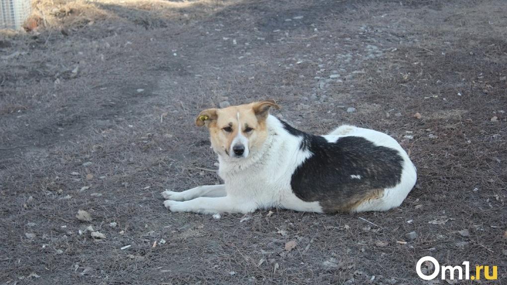 Будут отправлять обратно на улицу: в Омске определили правила содержания животных в приютах