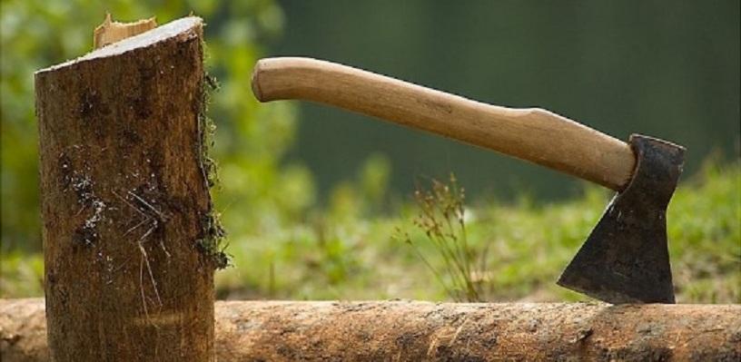 В омском парке «Зеленый остров» срубили 63 дерева