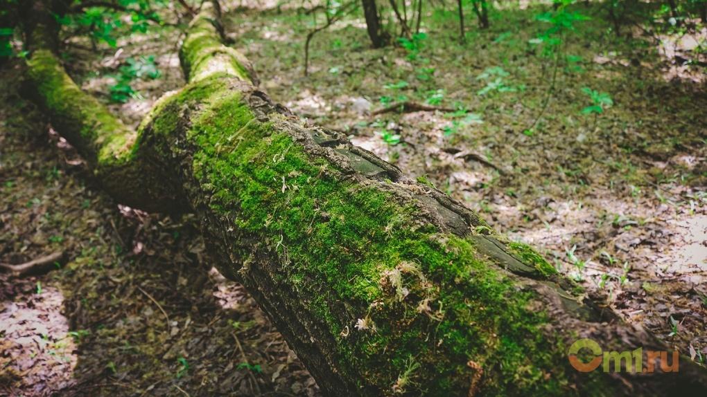 Бурков выделил 10 миллионов на вырубку деревьев