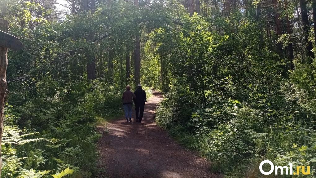 Запрещено ходить в лес и разводить костры: в Новосибирской области ввели особый противопожарный режим