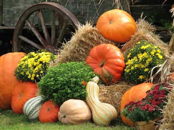 В Омске появится праздник, посвященный садоводам