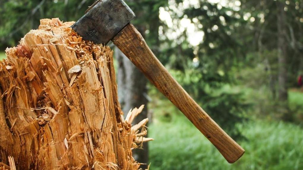 Незаконную вырубку леса на севере Омской области «крышевали» чиновники и силовики