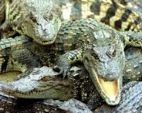 В Москве арестовали 134 крокодила и 10 змей