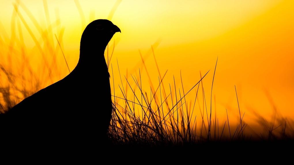 Новосибирцам запретили охотиться на дичь из-за коронавируса
