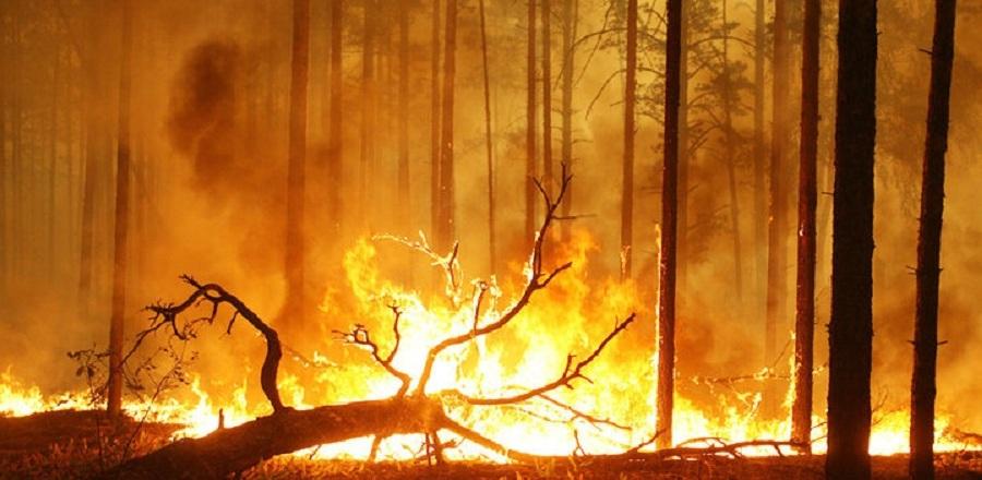 В Омской области каждый день возникают десятки лесных пожаров