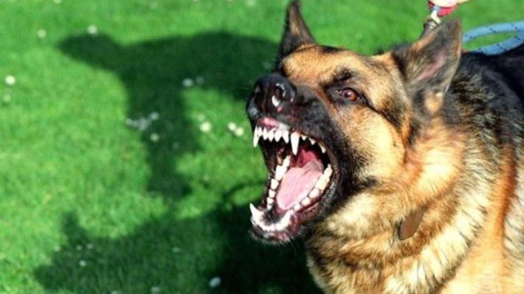 Собачье дело уголовное