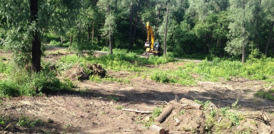 Омичей встревожила вырубка деревьев на Зелёном острове