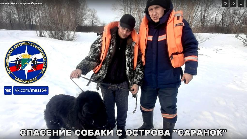 Собаку с заснеженного острова спасли в Новосибирске
