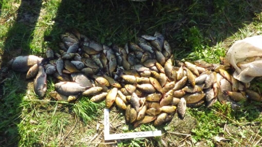 Омича застали посреди озера за нелегальной деятельностью