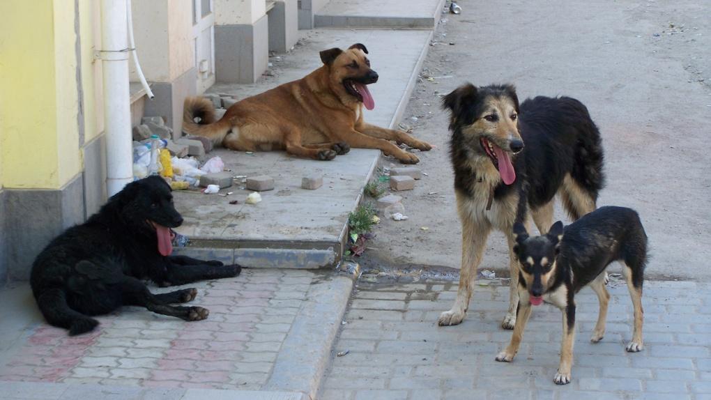 В Омске прокурор напомнил депутатам о бездомных собаках