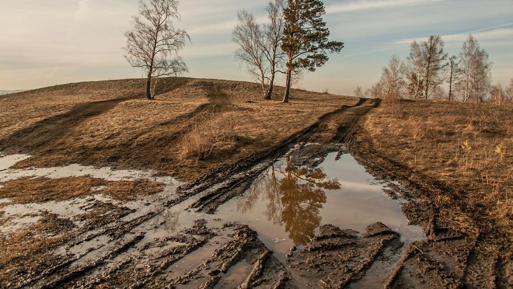 В Омской области на полях гниет урожай, а проехать к нему не могут из-за распутицы