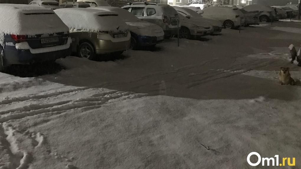 Подвижный антициклон: за сутки в Новосибирске выпала треть месячной нормы снега
