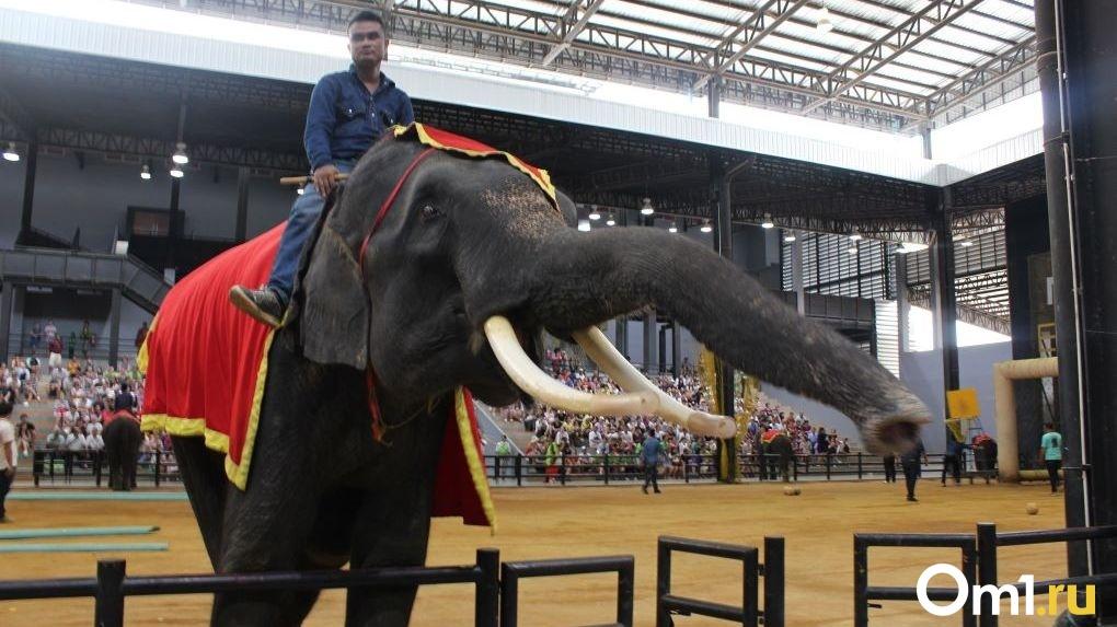 Новосибирская зообаза сообщила о гибели «военных слонов» из-за болезни