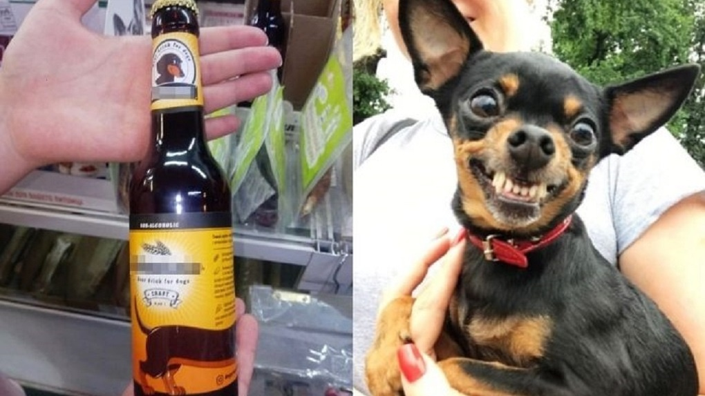 В Новосибирске начали продавать пиво для собак