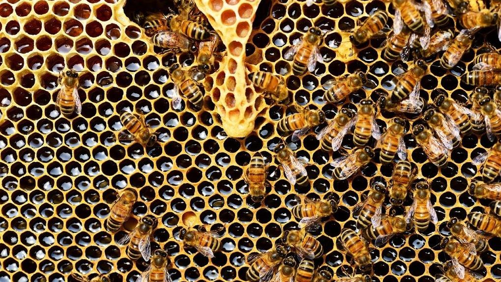 В Новосибирске следователи проводят проверку по факту массовой гибели пчёл