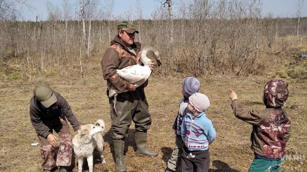 В Новосибирской области бесследно исчезла лебедь, танцующая под Чайковского