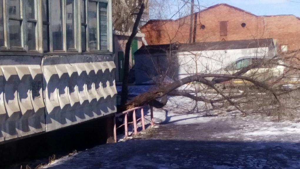 Ураган прошел! В Омске сорвало дорожные знаки и повалило деревья