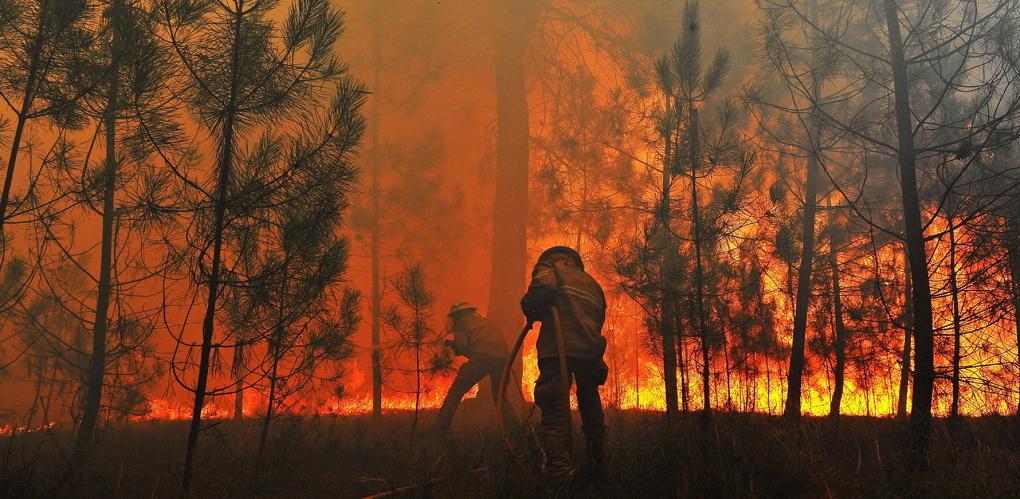 Из-за бушующих лесных пожаров в Омской области предложили ввести особый режим