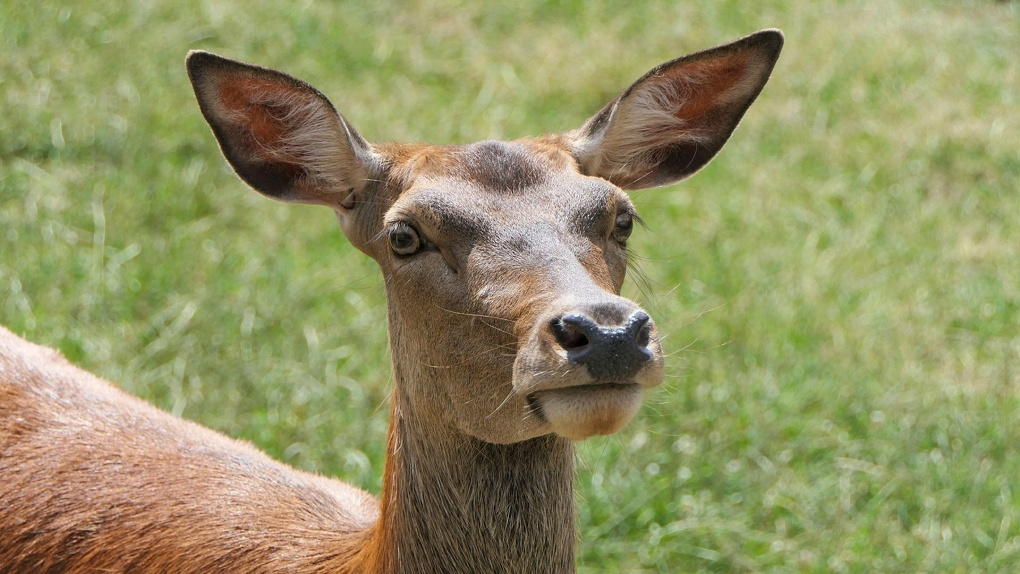 В омских лесах стало больше лосей, косуль и кабанов