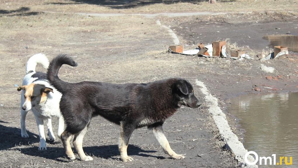 В Омске бездомные собаки съели лицо у мёртвого мужчины