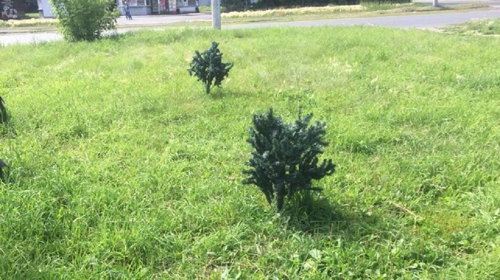 В Омске на аллее «выросли» искусственные елки