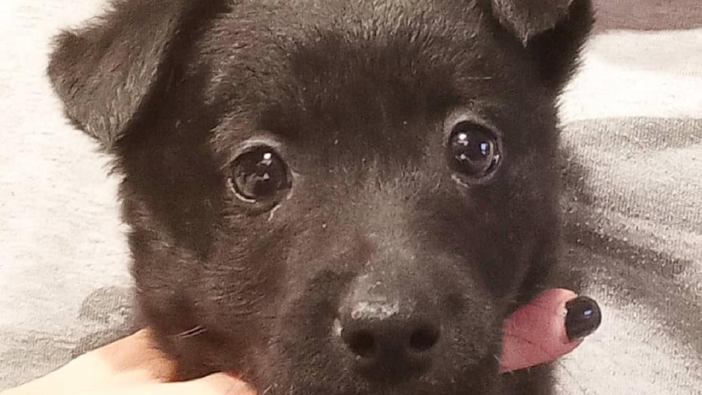 «Два часа провёл на снегу»: жительница Новосибирска бросила щенка на морозе около приюта