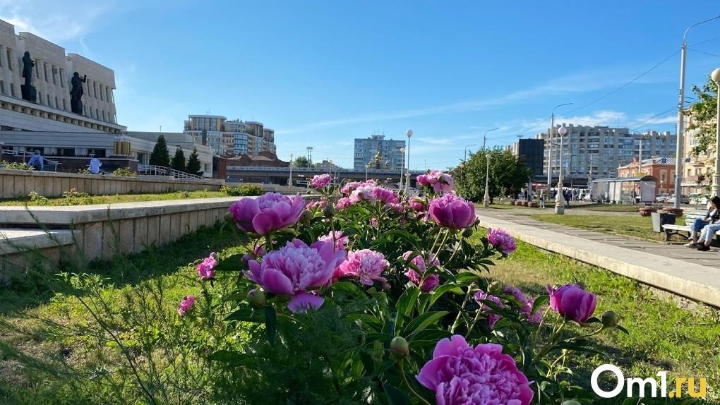 На выходные в Омск вернётся жаркая погода