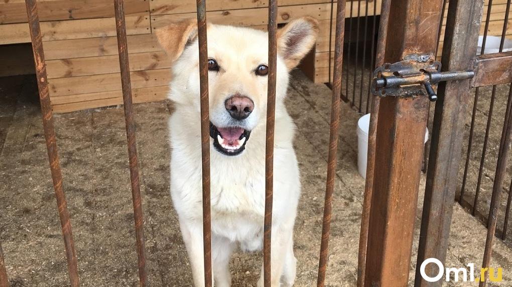 В Омске стартовала акция помощи бездомным животным