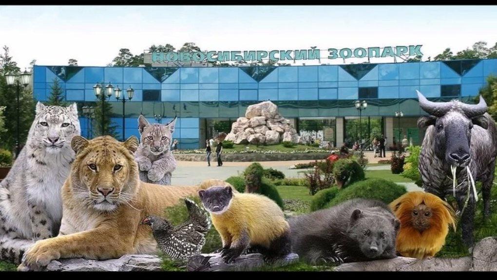 Стало известно, когда снимут режим карантина в Новосибирском зоопарке