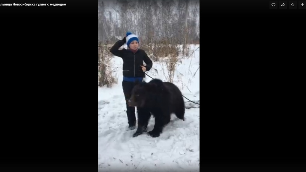 Прогулка с медведем: сибирячка сняла необычное видео с хищником