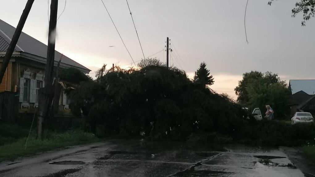 Вырванные с корнем деревья, разрушенные крыши: по Омской области прошелся ураган с дождем. Фото, видео