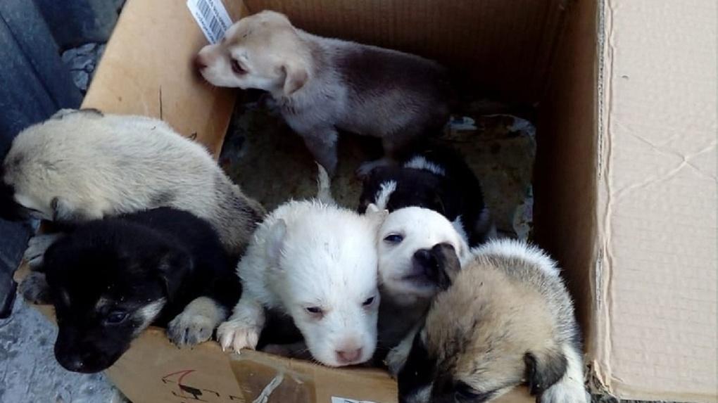 Новосибирские зоозащитники хотят бросить шестерых щенков на произвол судьбы