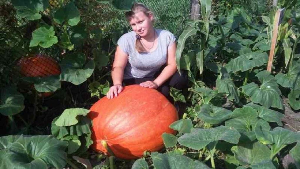 Девятиклассницы из Новосибирской области вырастили гигантскую тыкву