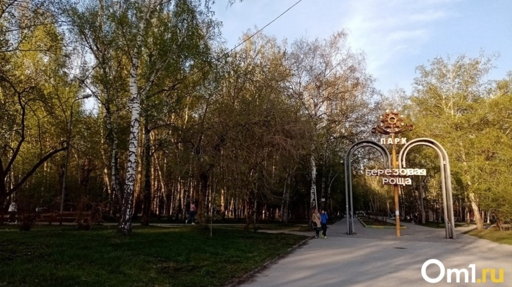 В новосибирском парке «Берёзовая роща» посадят 200 деревьев