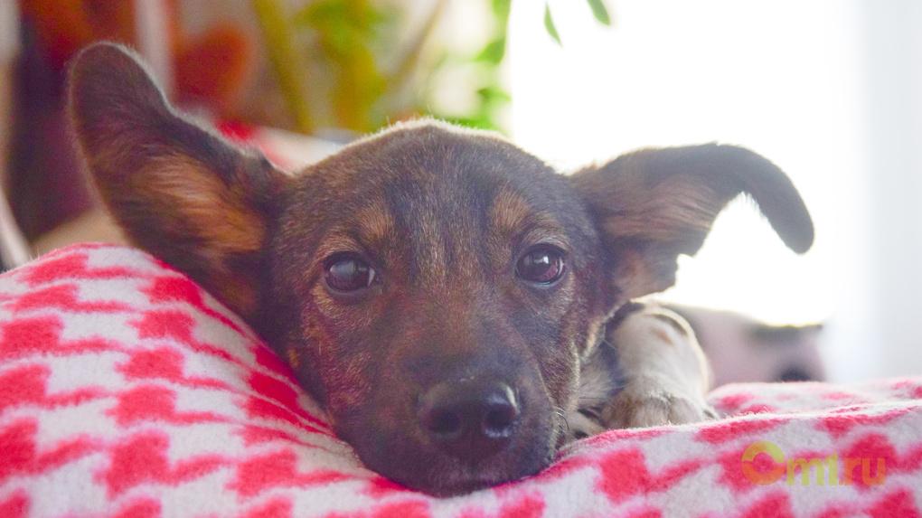 Омичи могут пожертвовать корм для бездомных собак