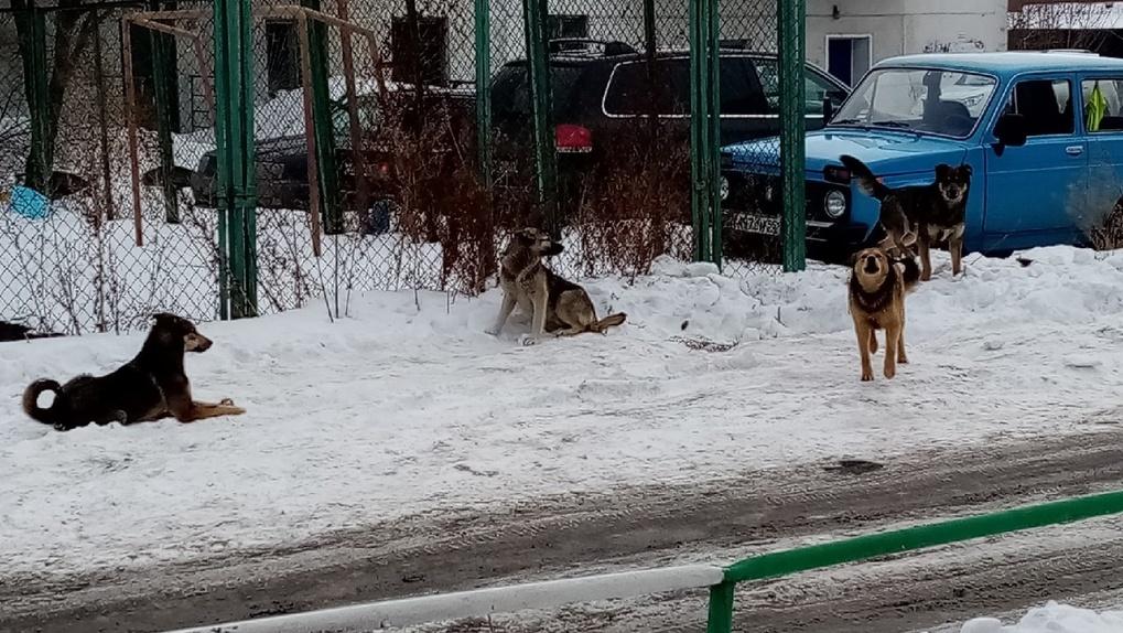 Омичка рассказала о нападении бездомных собак в Ленинском округе. ВИДЕО