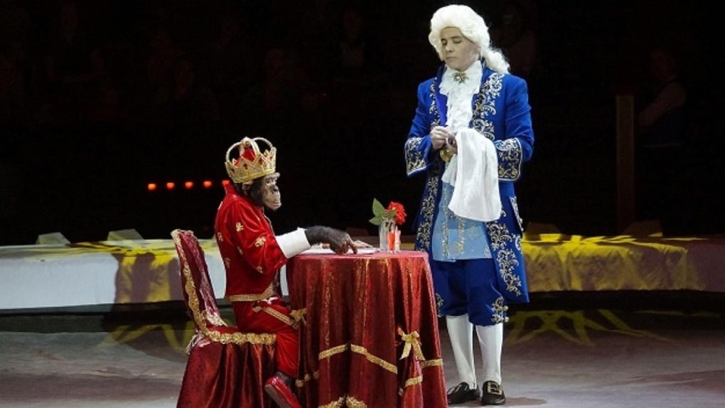 В омском цирке — новая программа «Шоу звезд цирка»