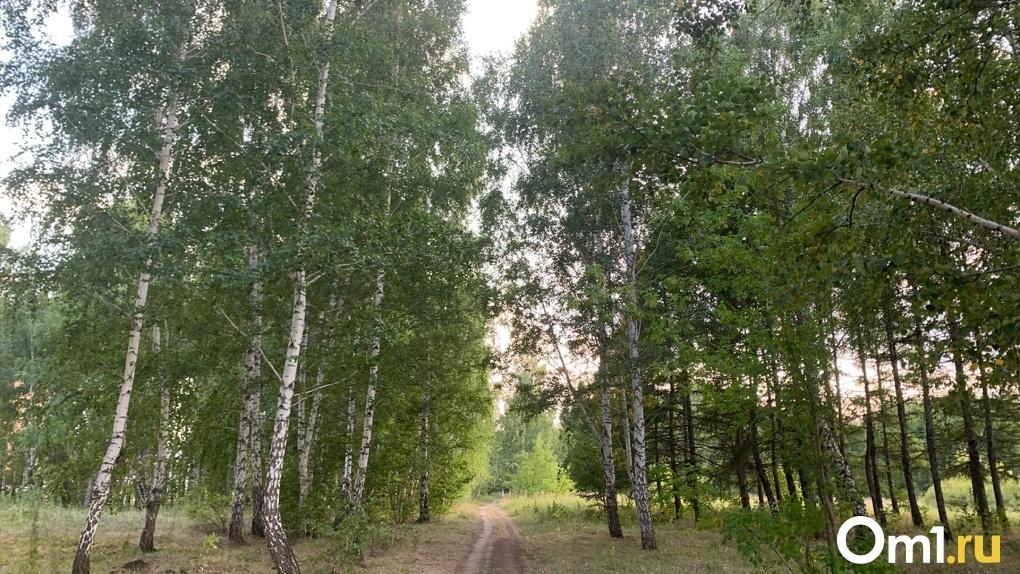 Причиной лесных пожаров назвали погодные аномалии, нетипичные для Омской области