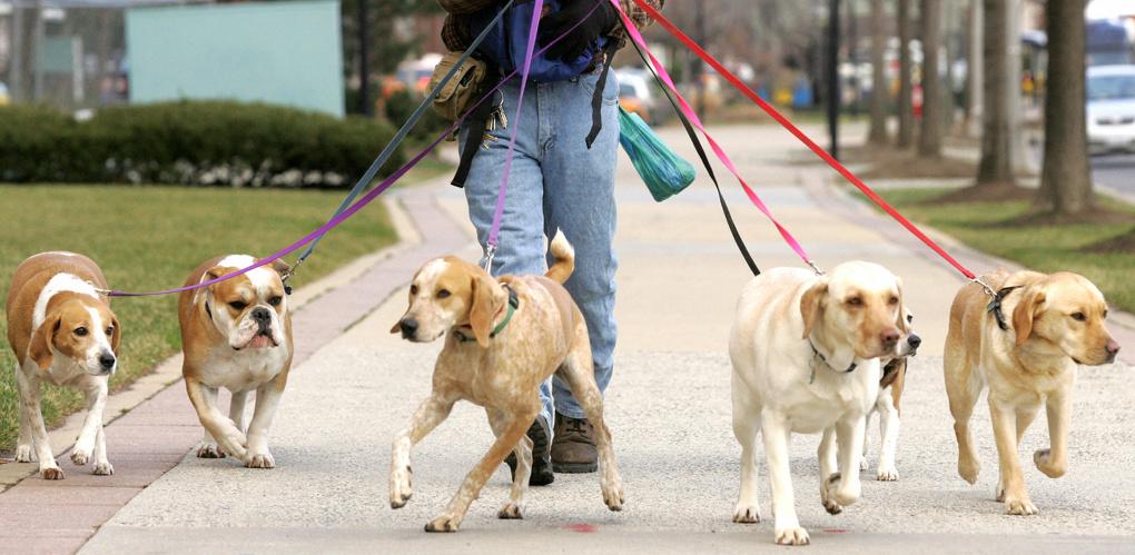 На «Зеленом острове» построили площадку для выгула собак