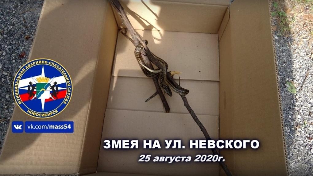 Змея заползла во двор новосибирской пятиэтажки