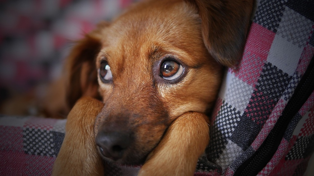Омичка, которая на глазах соседей жестоко убивала собаку, может сесть на три года