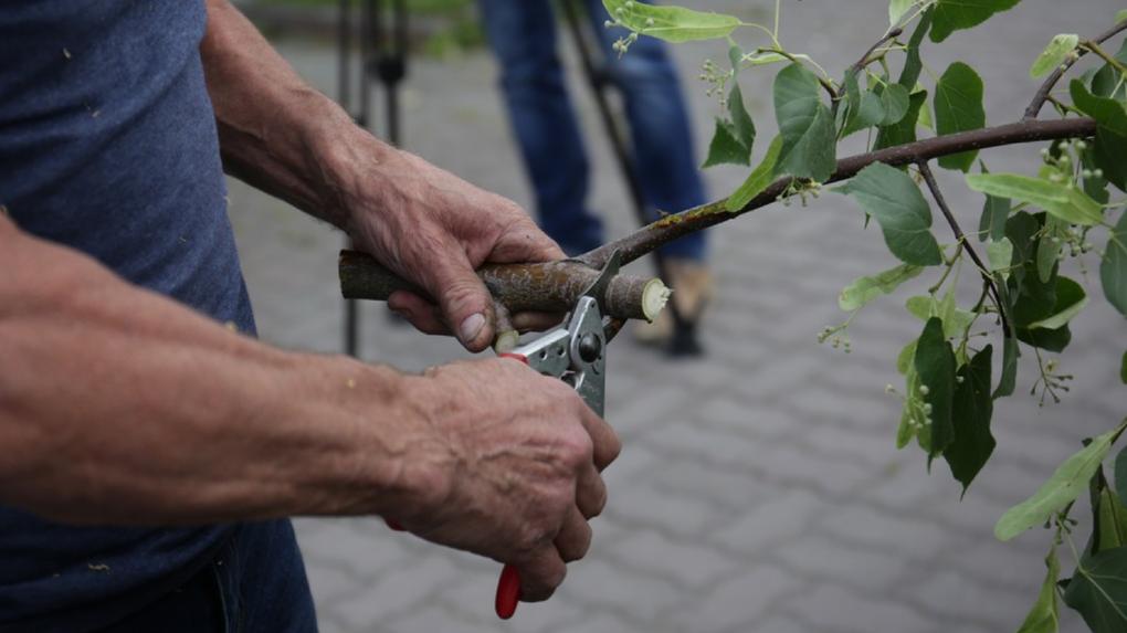 В Новосибирске создадут сообщество для агрономов