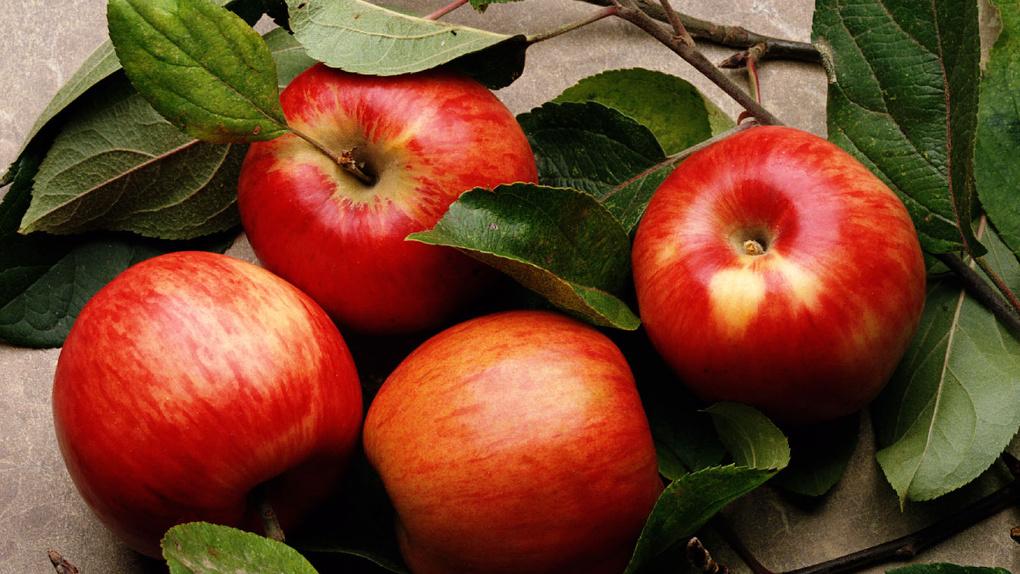 Нерадивая мать из Новосибирска пыталась откупиться от выплаты алиментов килограммом яблок