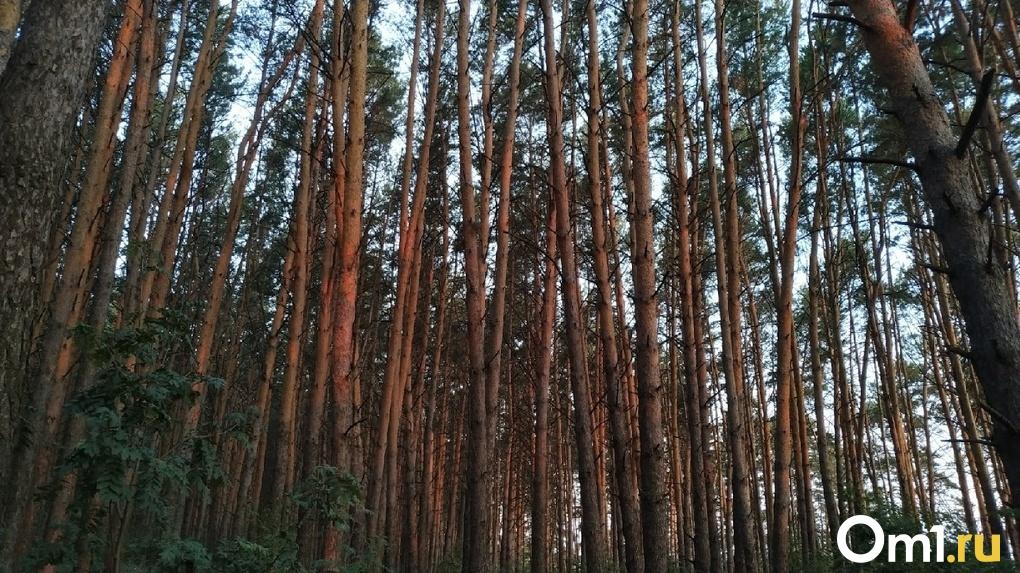 Пожилого омича, пропавшего неделю назад, нашли в лесу в тяжёлом состоянии