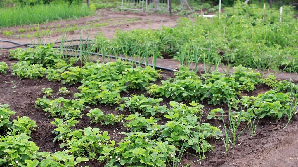 Омичи на самоизоляции активно занялись огородом и стройкой