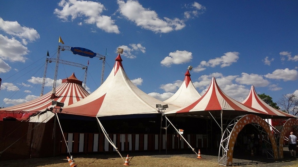 Артисты новосибирского цирка вынуждены работать грузчиками, чтобы прокормить животных