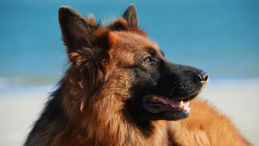 В Новосибирске едва не погибла собака, которая провалилась в колодец