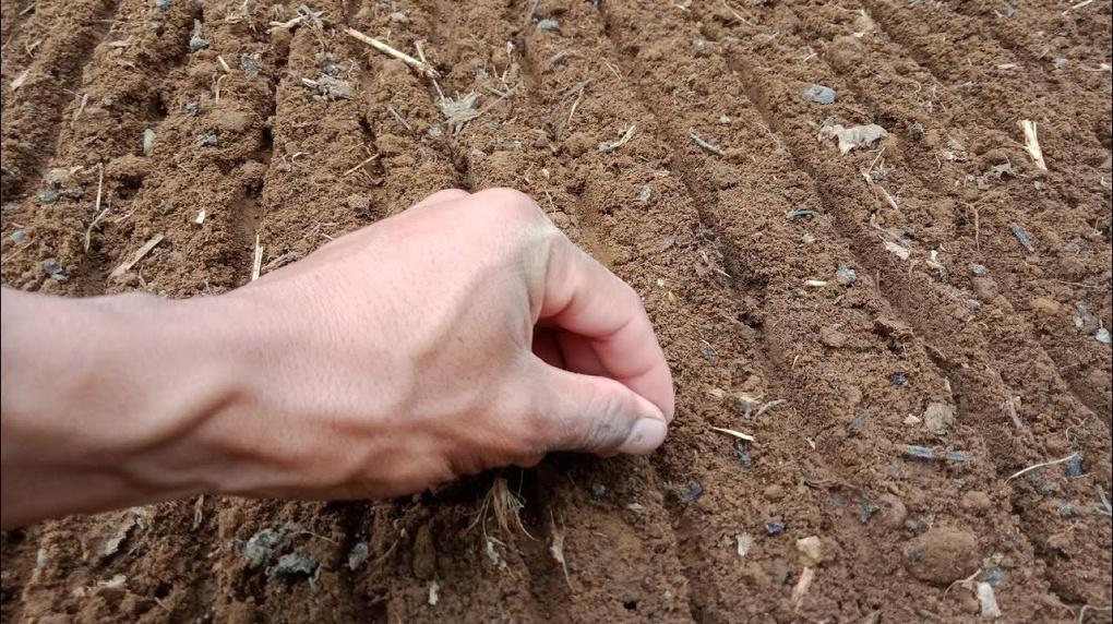 Урожай со скидкой: как сэкономить на покупке семян и удобрений